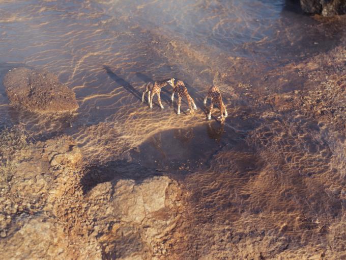Reticulated Giraffes - Geysir Iceland by Erik Hijweege