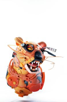 Wild kitty by Gilles Cenazandotti