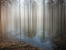 Alameda by Ellen Jantzen