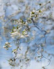 Spring breeze, Pompadour by Bastiaan Kijzers