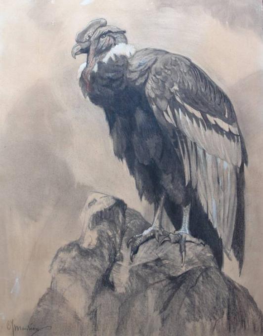 Condor by C.J. Mension