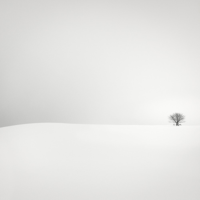 One Small Tree by Wilco Dragt
