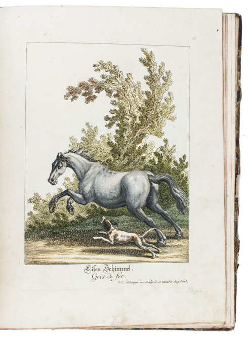 Horses in action: a great series of 50 horse plates, with the original drawing for the second plate by Johann Elias Ridinger