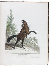 Horses in action: a great series of 50 horse plates, with the original drawing for the second plate