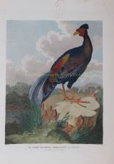 The Fire-Back Pheasant of Java   by Alexander, William (1767-1816)