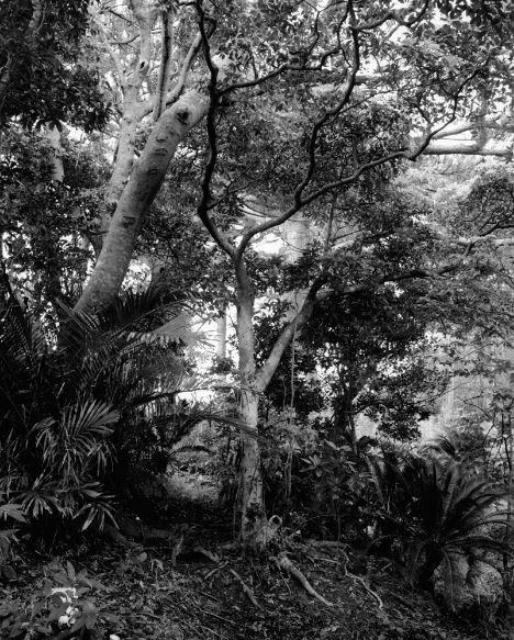 The Nurturing Island #5 by Emily Bates