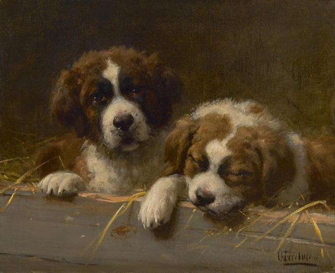 St Bernard puppies by Otto Eerelman