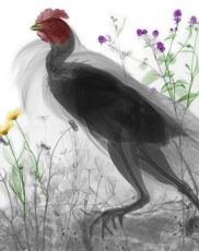 Chicken by Arie van 't Riet