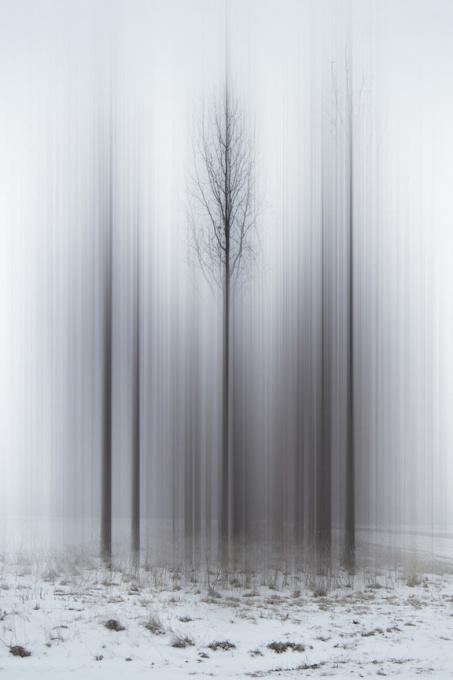 Promise of Spring by Ellen Jantzen