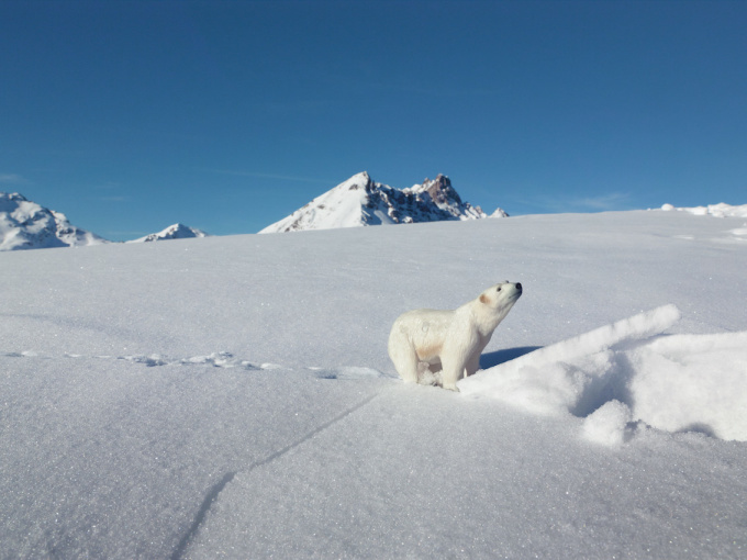 Polar Bear - Klosters Switzerland by Erik Hijweege