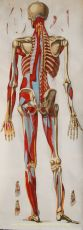 Van geneeskunst naar geneeskunde,  antieke kopergravure by Unknown Artist