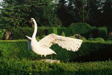 White Swan by Madeleine van der Knoop