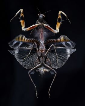 Bug V by Edo Kars
