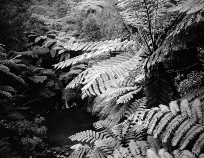 The Nurturing Island #3 by Emily Bates