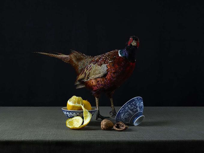 Surprised Pheasant by Jeroen Luijt