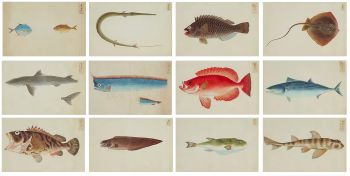 An extremely rare collection of twenty-four paintings of fish by Unknown Artist