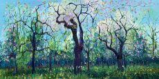 Bloei Appelbomen by Gertjan Scholte-Albers