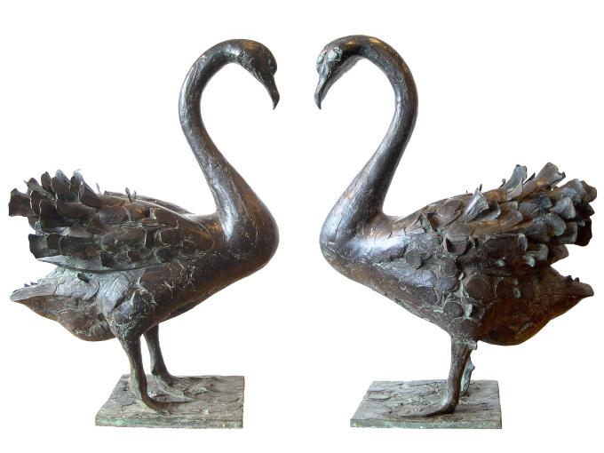Zwarte zwaan by Coba Koster