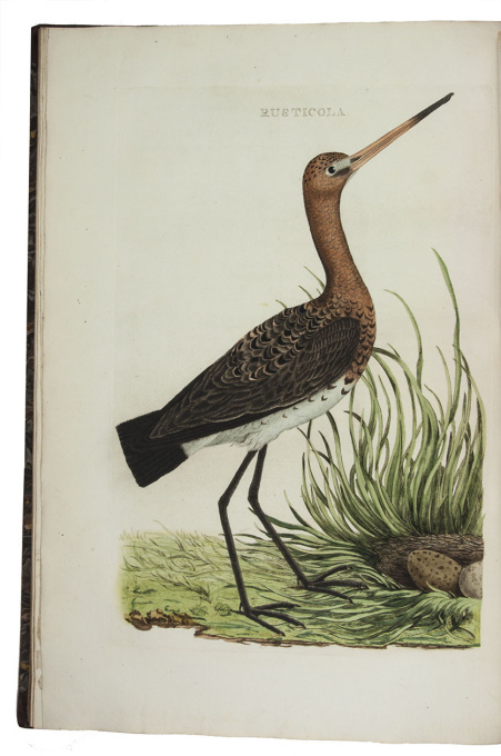 Famous work on birds in the Netherlands, with 250 hand-coloured plates by Cornelis Nozeman