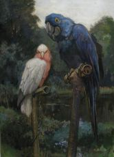 Hyacinth macaw and Rose-breasted cockatoo at Artis Zoo by C.J. Mension