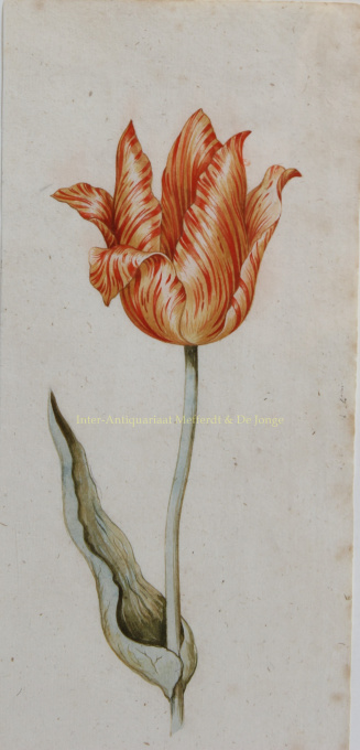 MYSTERIOUS TULIP PAINTER    by Anonymous