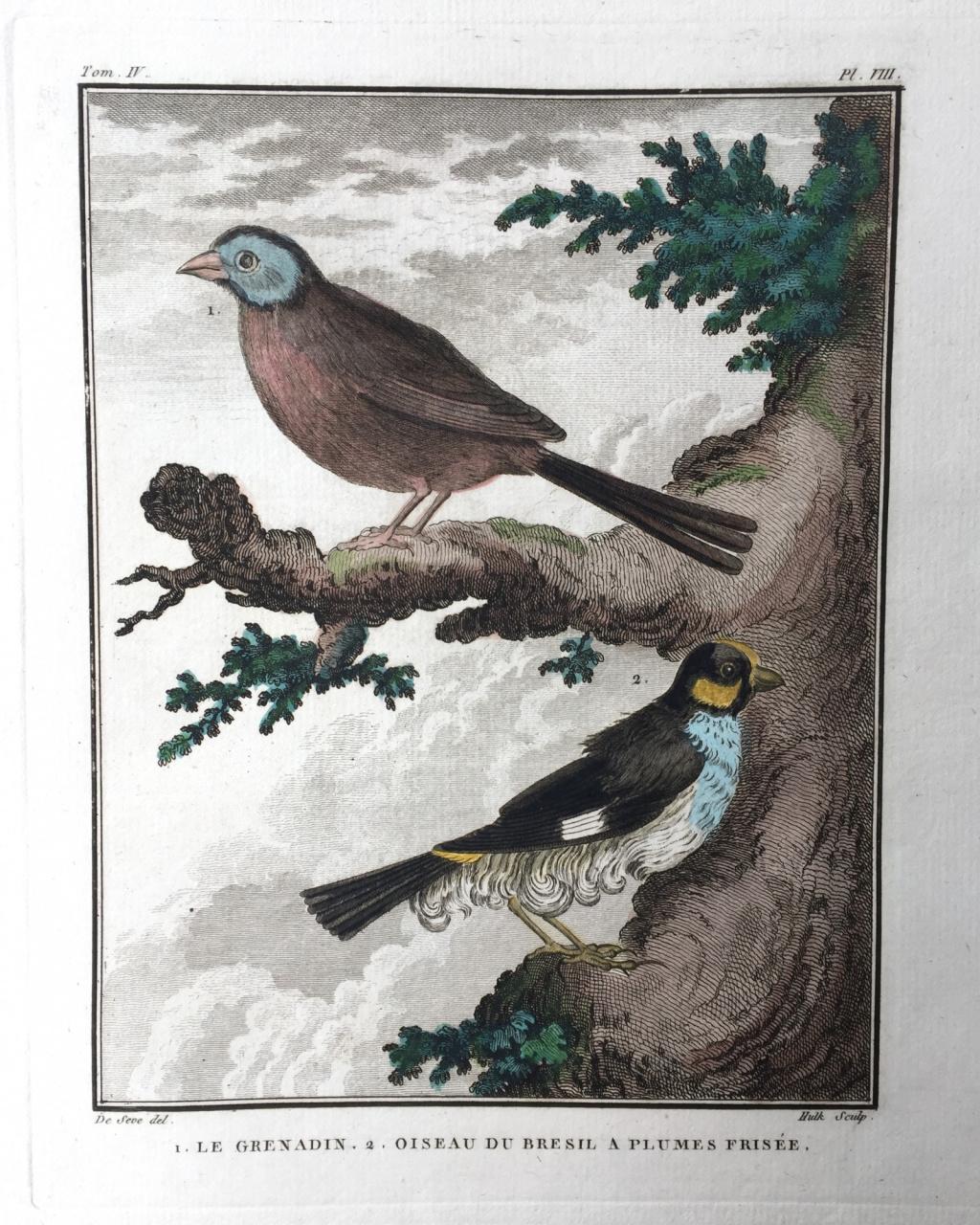 19th Century Rare Original Antique Hand Colored Engraving From Dictionnaire Histoire Naturelle des Oiseaux  Buffon de comte humming birds