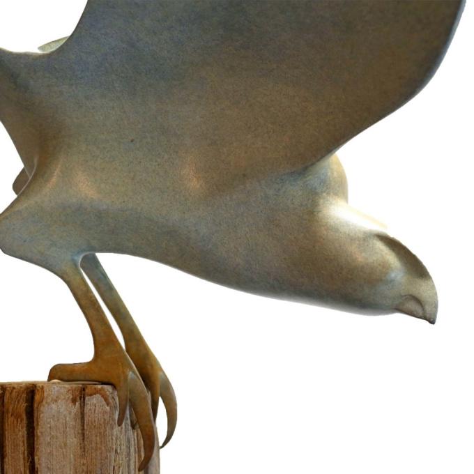 Falcon wings open by Mark Dedrie