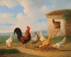 A rooster with chickens near a run