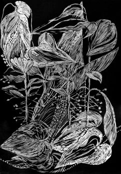 Black leaves IV by Magdalena Chmielek